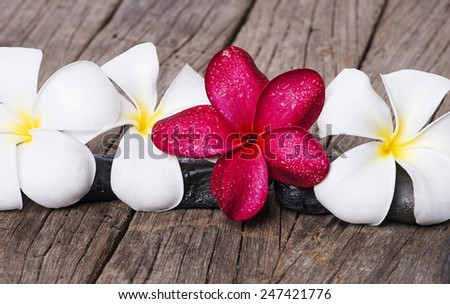 Frangipani or Plumeria flower on wooden background. - stock photo