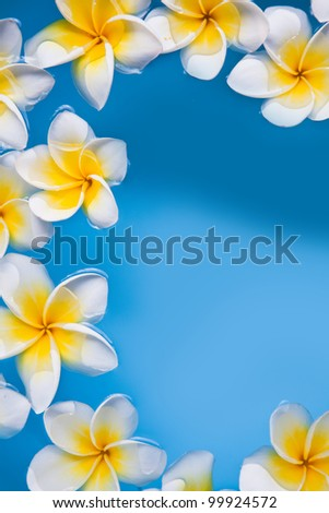 Frangipani plumeria flowers in the water - stock photo