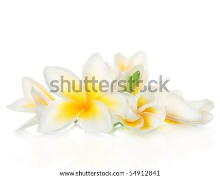 Frangipani Spa Flowers - stock photo
