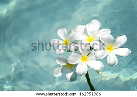 frangipani spa flowers over shiny water background-4 - stock photo