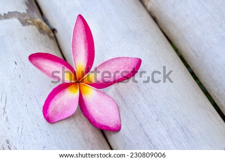 Frangipani tropical flowers on wood background - stock photo