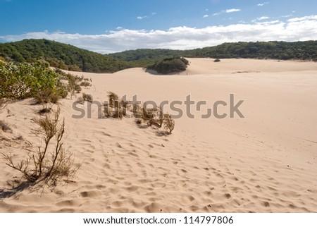 Fraser Island desert dune landscape, Australia - stock photo