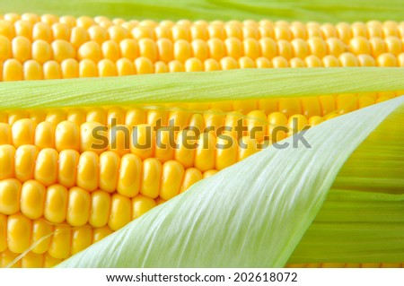 frash corn - stock photo