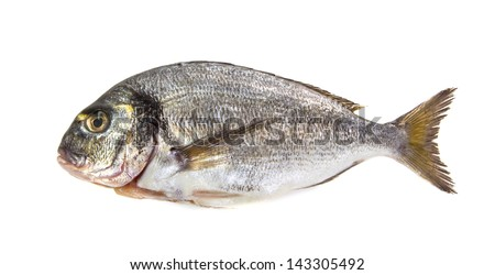 Freash Seabream isolated on white - stock photo