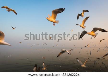 freedom seagulls - stock photo
