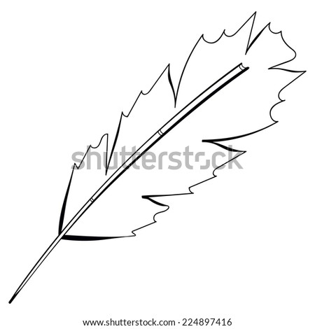Freehand drawing black bird feather isolated on white background. - stock photo