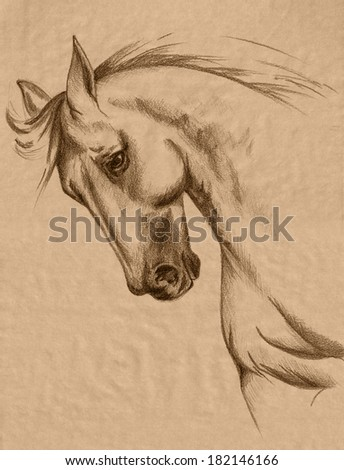 freehand horse head sepia toned pencil drawing - realistic animal sketch - stock photo