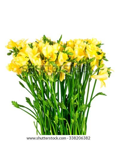 Freesia flowers isolated on white background - stock photo