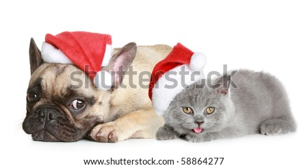 French bulldog and grey kitten in Christmas hat lies on a white background