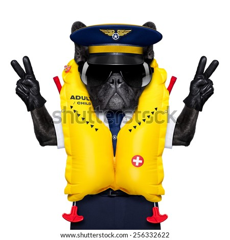 french bulldog dog as an airline cockpit captain wearing a yellow life vest , with peace and victory fingers,  isolated on white background - stock photo