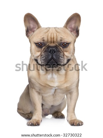 French bulldog (dog), front view, sitting, looking at the camera, and smiling(Digital enhancement) - stock photo
