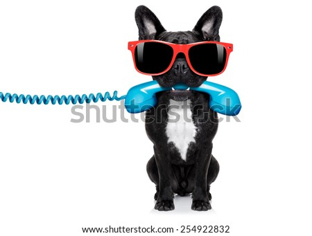 french bulldog dog holding a old retro telephone wearing red sunglasses, isolated on white background - stock photo