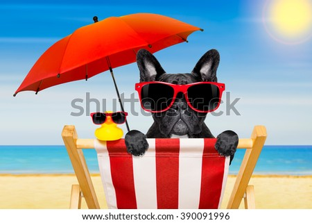 french bulldog dog   on a  beach chair or hammock at the beach relaxing  on summer vacation holidays, ocean shore as background , with red umbrella - stock photo