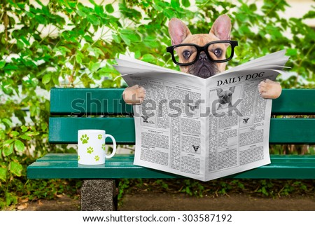 french bulldog dog reading a newspaper or magazine sitting on a bank at the park, relaxing and having a cup of tea or coffee - stock photo