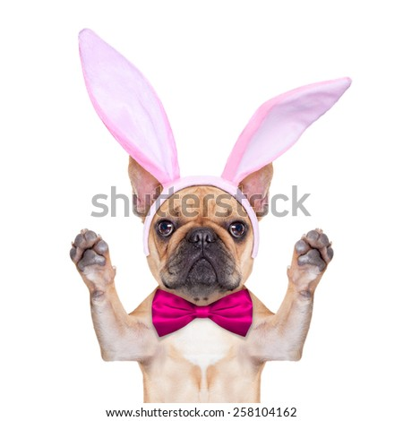french bulldog dog  with bunny easter ears and pink tie behind a white blank banner or placard, isolated on white background - stock photo