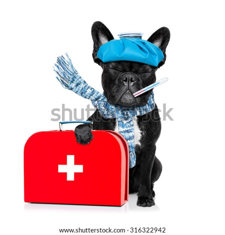 french bulldog dog  with  headache and hangover with ice bag or ice pack on head, eyes closed suffering , isolated on white background, holding first aid kit - stock photo