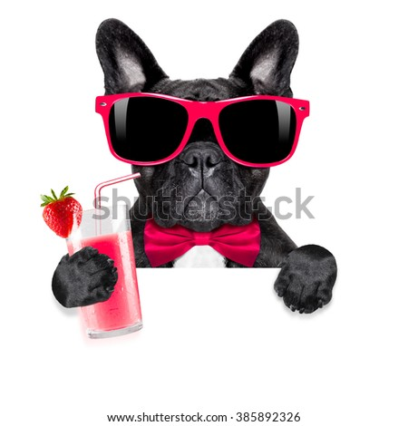 french bulldog dog  with  milkshake smoothie cocktail and funny glasses behind blank placard isolated - stock photo