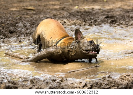 Dirty Dog Stock Images Royalty Free Images Amp Vectors