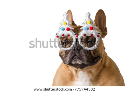 French bulldog in Christmas and new year concept on white background