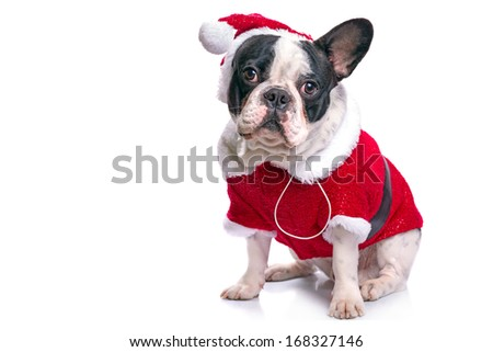 French bulldog in santa costume for Christmas over white - stock photo