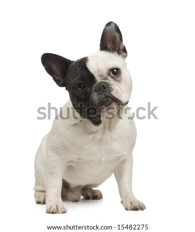 french Bulldog (18 months) in front of a white background - stock photo