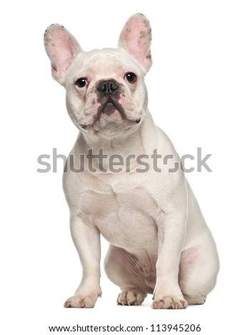 French Bulldog, 7 months old, sitting against white background - stock photo