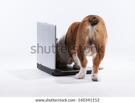 French bulldog over a laptop computer - stock photo