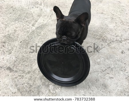 Top Bulldog Black Adorable Dog - stock-photo-french-bulldog-playing-a-game-for-exercise-has-a-plastic-black-circle-in-the-mouth-cute-dog-783732388  2018_30859  .jpg