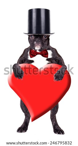 French bulldog puppy in a cylinder with a heart in his paws - stock photo