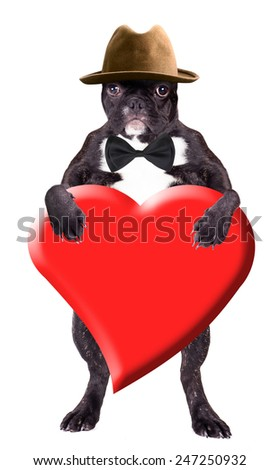 French bulldog puppy in a hat with a heart in his paws - stock photo