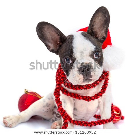French bulldog puppy in santa hat  with present boxes over white - stock photo