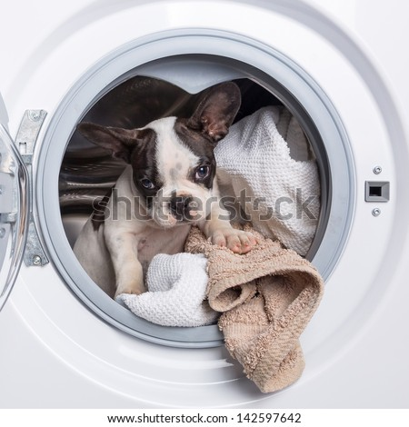 French bulldog puppy inside the washing machine - stock photo