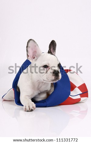 French bulldog puppy, 3 months old, lies in the hat on a white background - stock photo
