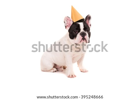 French Bulldog puppy wearing a festive hat, isolated over a white background - stock photo