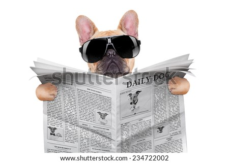 french bulldog reading the newspaper, with cool sunglasses, isolated on white background - stock photo