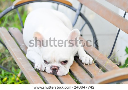 French bulldog's sleeping on the bench - stock photo