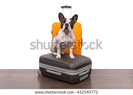 French bulldog sitting on the luggage ready for travel - stock photo