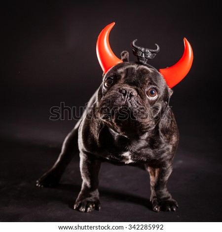 french bulldog wearing devil horn - stock photo