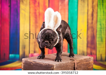 french bulldog wearing easter bunny ears - stock photo
