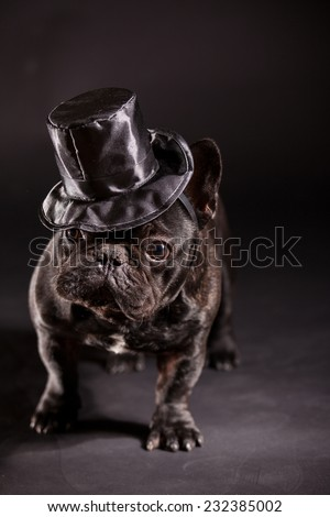 french bulldog wearing stovepipe in studio - stock photo