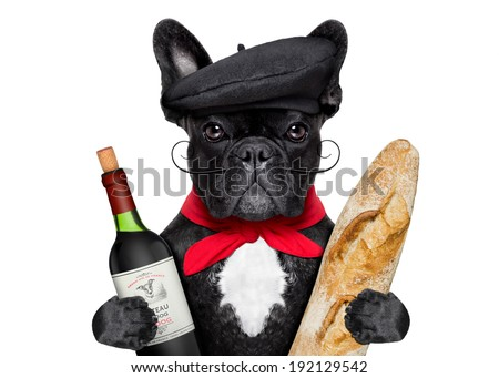 french bulldog with red wine and baguette and french hat - stock photo