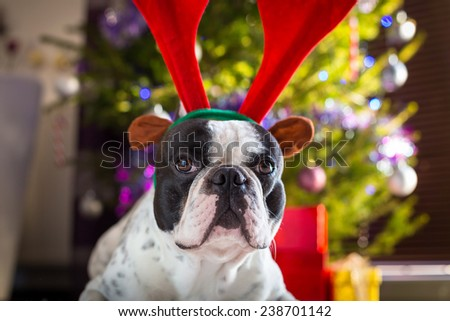 French bulldog with reindeer horns under Christmas tree - stock photo