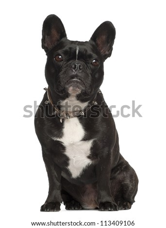 French Bulldog, 6 years old, sitting against white background - stock photo