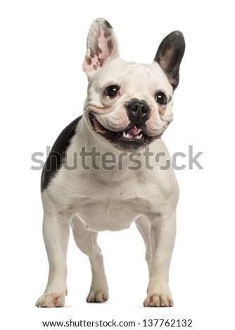 French Bulldog, 2 years old, standing and facing, isolated on white - stock photo