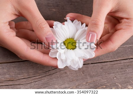 French manicure with white daisies on the old wooden background. Beautiful design of manicure.