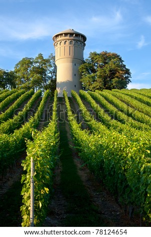 French vineyard - Beautiful lush, green vineyard rising into a perfect blue sky - stock photo