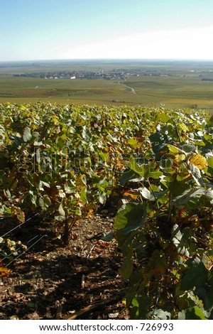 French vineyards, Champagne, France