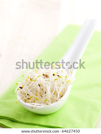 fresh alfalfa sprouts on a spoon