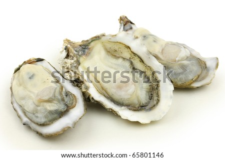 fresh alive oysters on a white background - stock photo