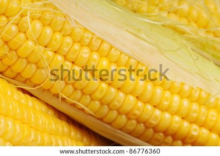 Fresh an ear of corn on a white background - stock photo